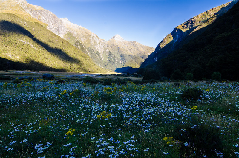 Flowers in the Siberia Valley