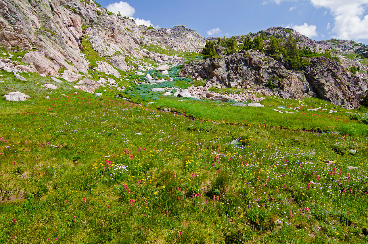 Wildflowers for days.  Looking back up at the descent route