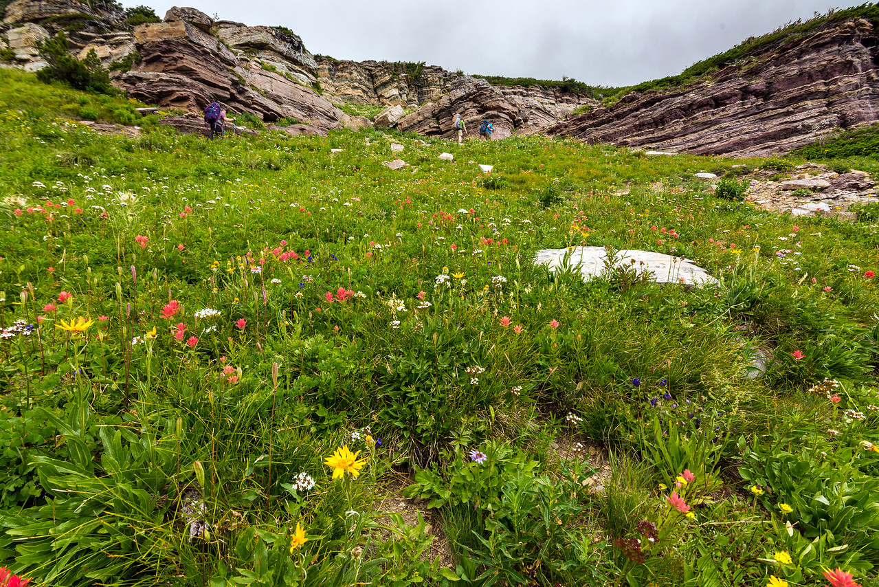 Flowers on the Dawson Pass Trail