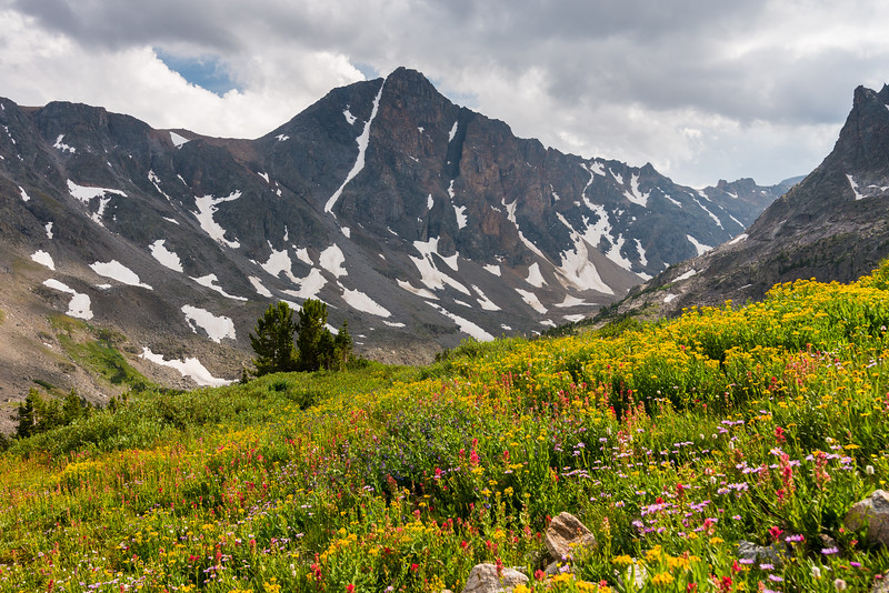 Whitetail Peak and a carpet of flowers