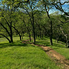 New Almaden Trail 021315-0459-2