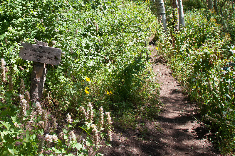 Intersecting trail to Alexander Basincuts in about 2/3 thru the hike.