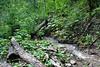 Lower trail.