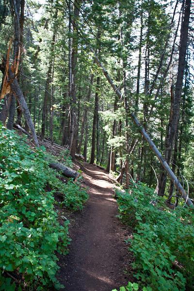 Troll forest. Be warned.