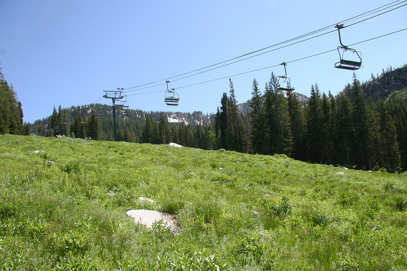Begining of trail thru the ski area. Wildflowers still to bloom here, about another week. ( 7/24/2011). Lots and lots of flowers in a week or two, we'll be back to go Twin Lakes this way to see them.