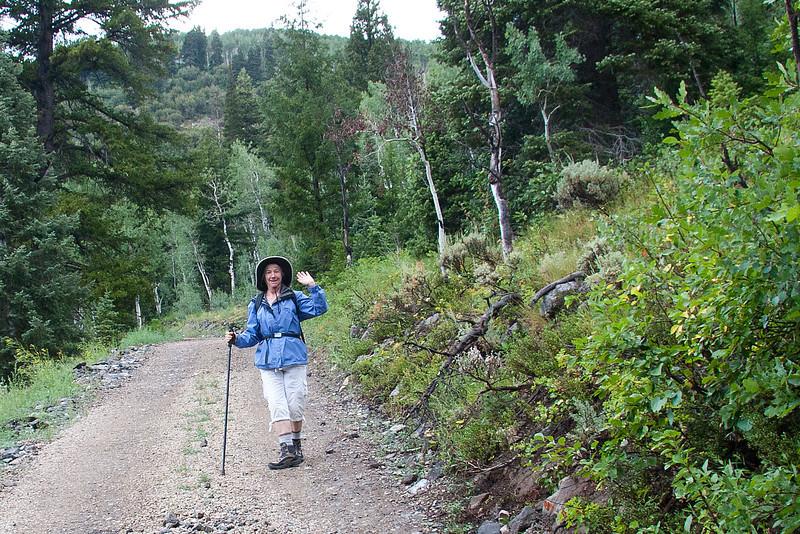 Cabin approach road.