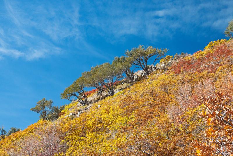 Japanese Garden of Scrub Oak.