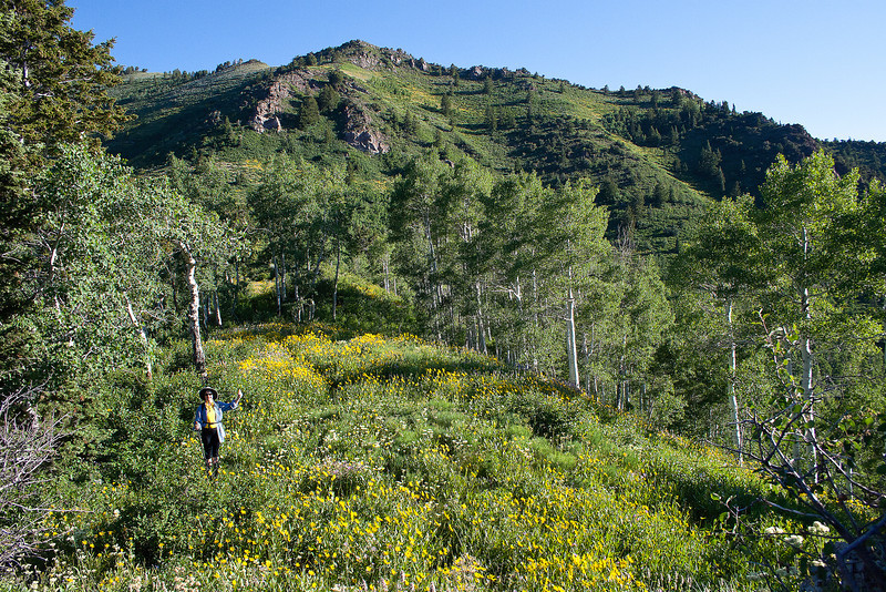 Summit of Gobblers Knob, the tallest peak between Big Cottonwood and Millcreek Canyon's.