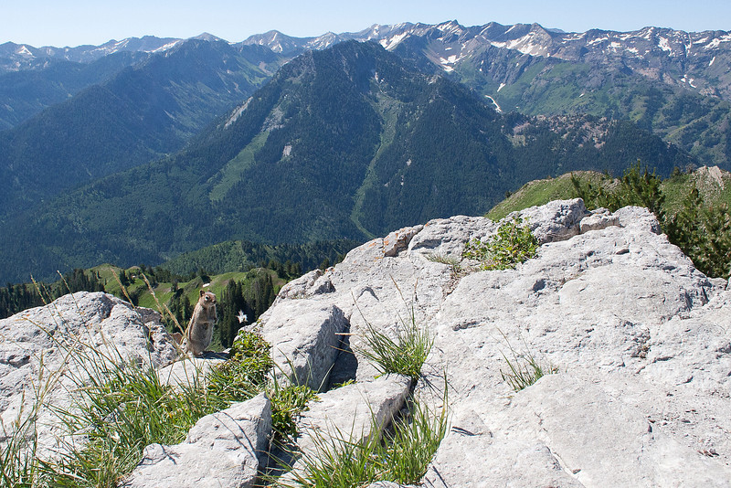 View from the Summit of Gobblers Knob-  August 2011. Find the chipmunk.