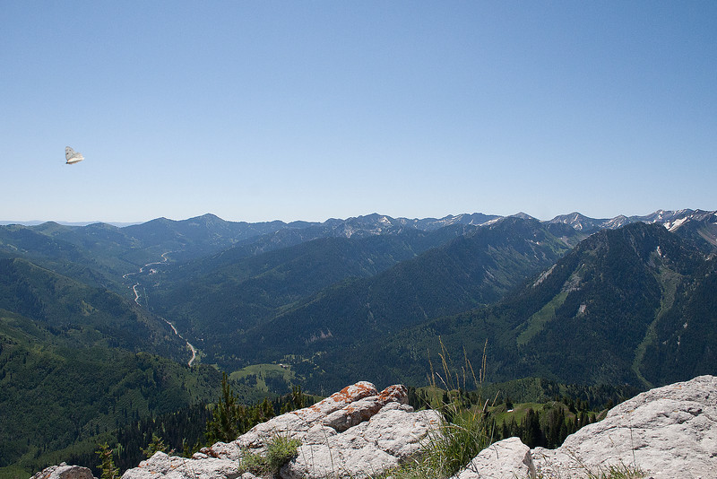 From the summit of Gobblers Knob, August 2011.
