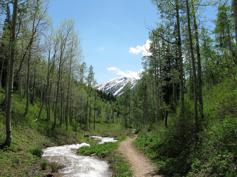 Mill D trail, late June. EZ 5.6 round trip to Dog Lake, no dogs allowed at Dog Lake. Big Cottonwood Canyon.