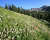 Albion Basin. Why I hike.