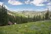 "Albion Basin,upper Little Cottonwood Canyon. "" Cecret Lake Trail"".  Flagstaff Ridge across LCC. If you pay attention to the media, they usually announce the peak wildflower season, a two week window toward the end of July. The easiest and one of the most rewarding of all Wasatch hikes, many deer and moose, awesome scenery. Starts from an elevation about 9500 ft. above sea level, allows access to the upper 11,000 ft peaks, many small lakes, and high alpine scenery. Wildflower season is world class. See my Moose<br /> portfolio, also taken here....."