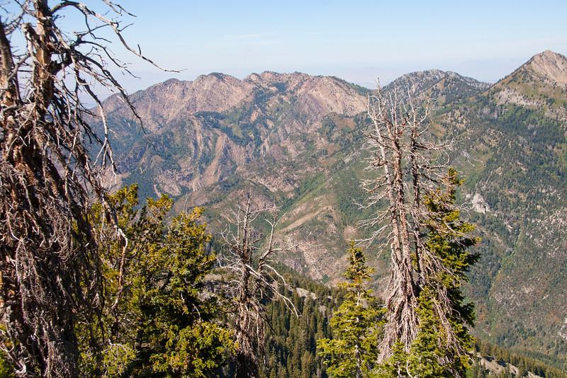 Wildcat Ridge from near lower mine.
