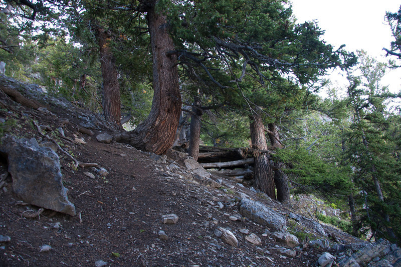 Miners cabin. 9500 ft.