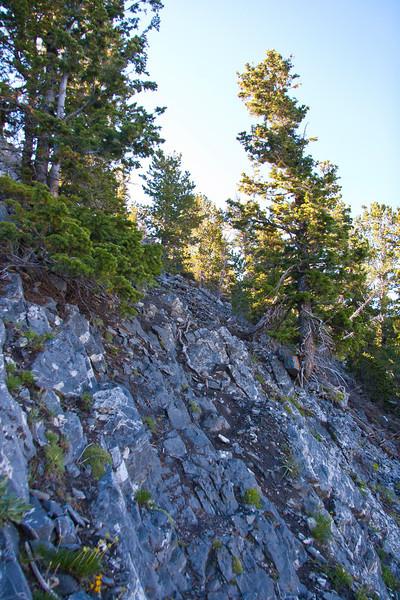 Upper trail, Trail?