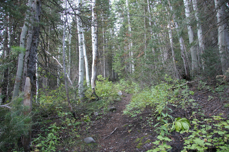 Trail nice and soft here, about 8,000 feet.