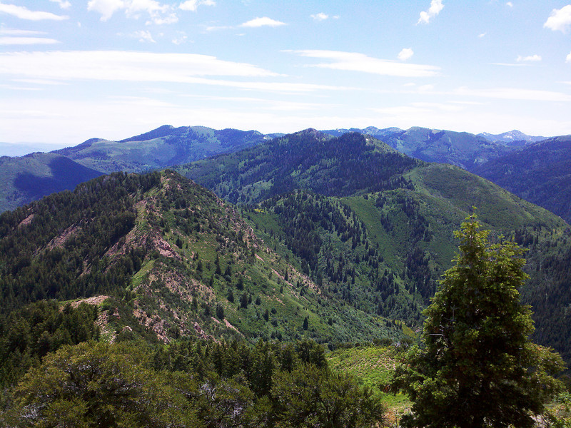 This view has the whole of Millcreek Ridge from above the saddle - view to East from summit.