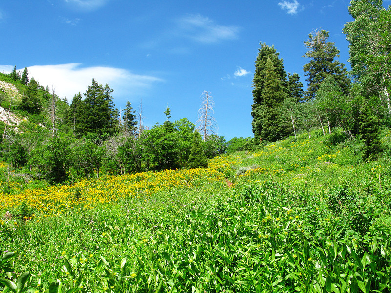 Wildflower field toward the saddle,,, takes just over an hour to the saddle, which is about 2/3 of the hike to the peak.