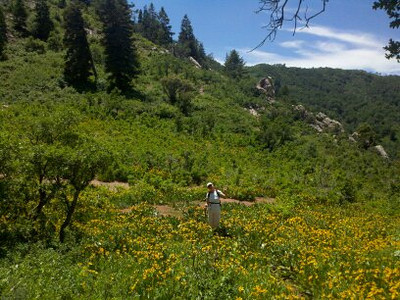 Great wildflower field, as you approach the saddle, ( at least on July 15 or so)., The saddle has great views...