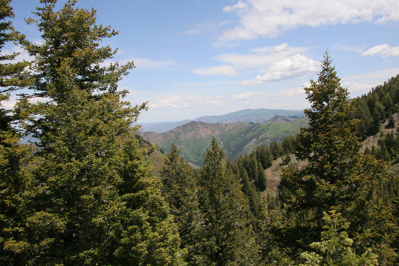 View from ridge into Millcreek Canyon, Mt Aire center frame.
