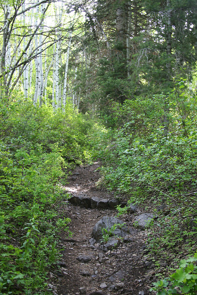 Trail between the waterfall and the meadow is wooded, steep, and very nicely shaded.