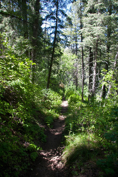 Lowest Mile or so of Thaynes Canyon, Millcreek Canyon, is cool and in the woods.<br /> Not too steep at the bottom and really pretty.