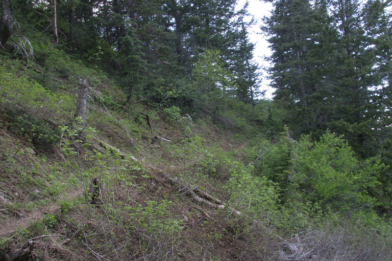 When I found the upper Thaynes / Desolation Trail,, I was ready for it.