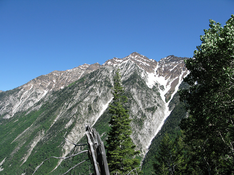 Tanners Gulch Slide Path, from the Red Pine Trail about halfway.July 2 2011.