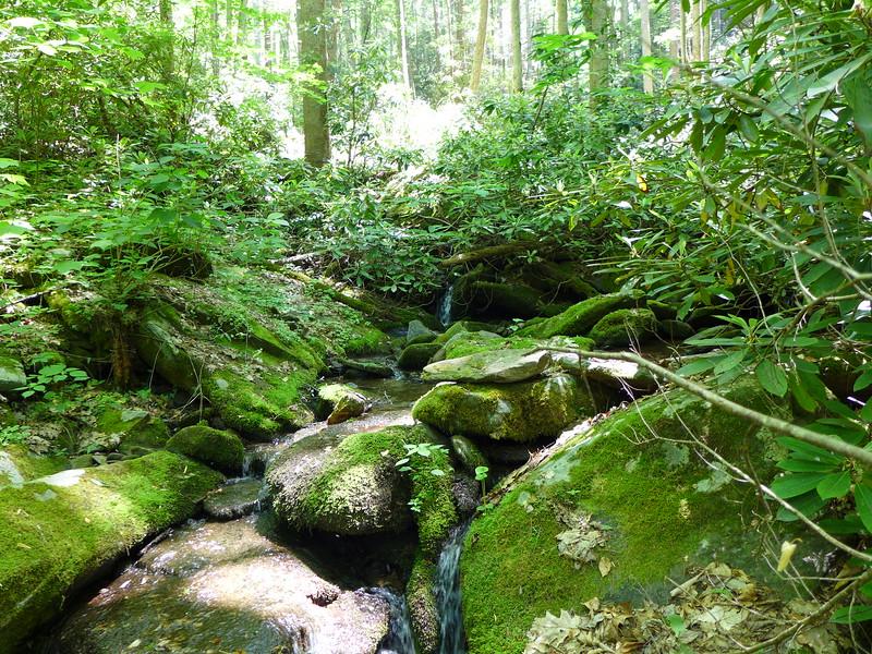 Teeny, tiny Rube Rock Creek