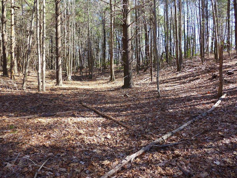 """Flat area of the """"shelf"""" that lies in the gap to the NW of Little Sassafras Peak."""