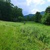 More gorgeous, open meadows!