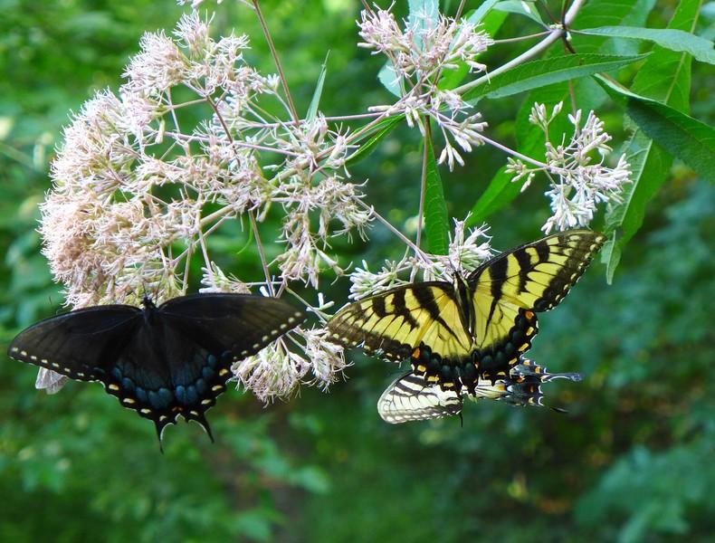 3 butterflies in one shot!!
