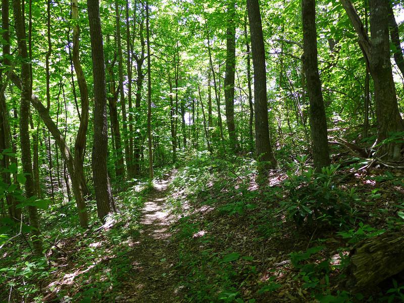 Buck Spring Trail