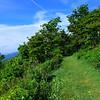 Grassy Swath near the top of Buck Spring Trail