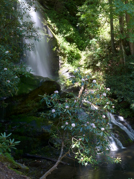 Rhododendron lined falls