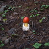 Mushroom seen along one of our bushwhacks