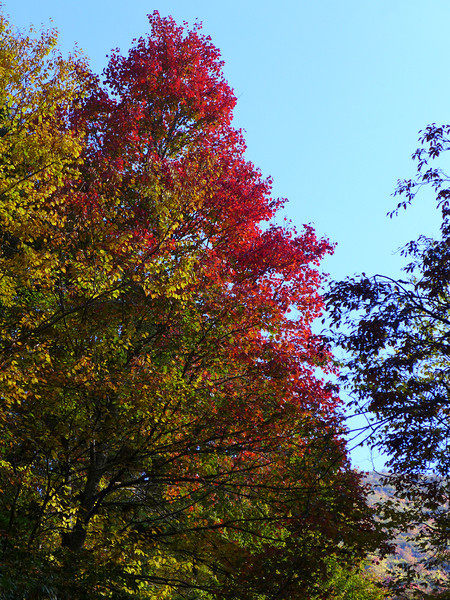 <h1>Fall Color Along Flat Laurel Creek</h1>
