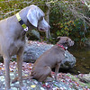 <h1>Boone and Kona</h1>And what are they so intently looking at??   See the next photo .....