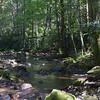 Looking downstream along Rocky Fork Creek