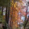 <h1>Fall Color</h1>Along the trail to Rainbow Falls.