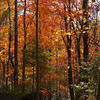 <h1>Fall Color</h1>...at the Ray Fisher campsite area.