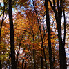 <h1>Fall Color</h1>