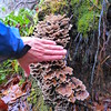 Relative size of the fungus