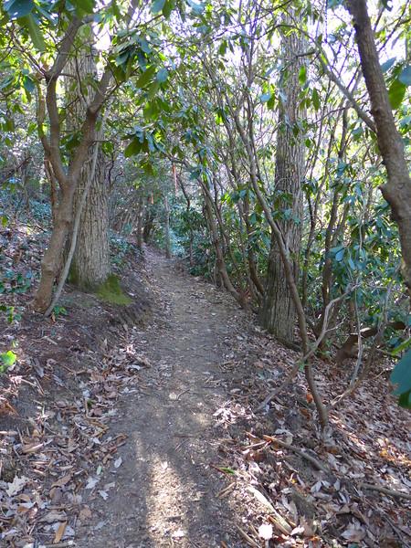 Little Bearwallow Mtn Trail