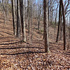 <h1>A section of an old forest road</h1>....that runs along the south side of Raven Cliff Ridgeline.