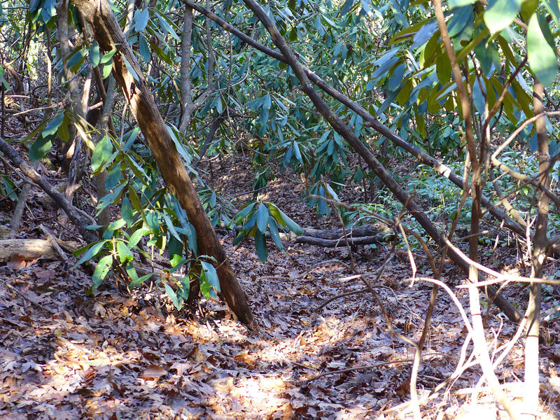 "<h1>The old overgrown ""trail""</h1>...that comes up from Julian Creek to the gap west of Raven Cliff Ridgeline."