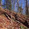 <h1>Looking up at the Raven Cliff Ridgeline</h1>...from the old forest road that runs south of it.