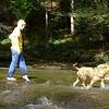 Crossing Cove Creek