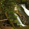 Howard Creek at 1500'